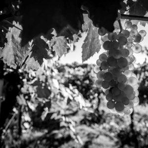uva-esterni-37-web
